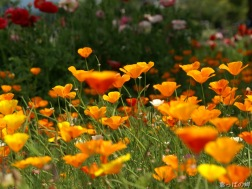 4aa3b389_digital-flower-phorography-newflower147_wallcoo.com
