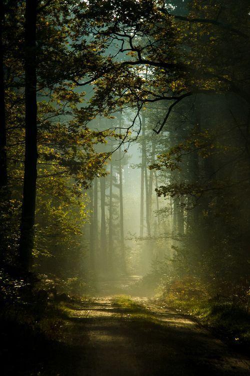 Lạy Chúa, xin dạy con đường lối thánh chỉ. Con nguyện đi theo mãi đến cùng.